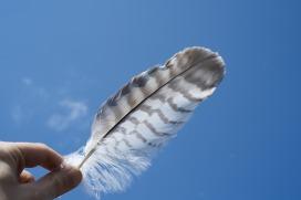 Archangel Wellness Magic Feather